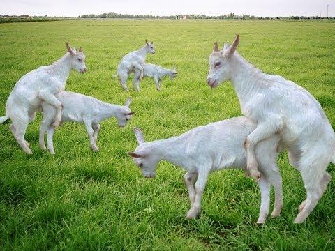 sex goats   helen hunt sexy