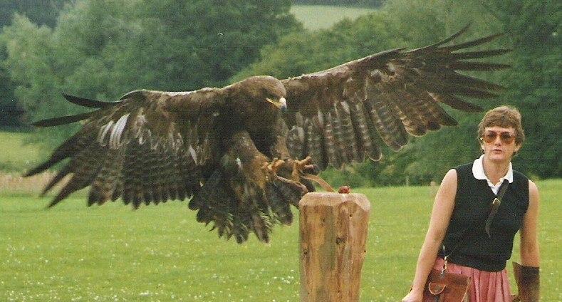 harpy eagle size comparison Gallery