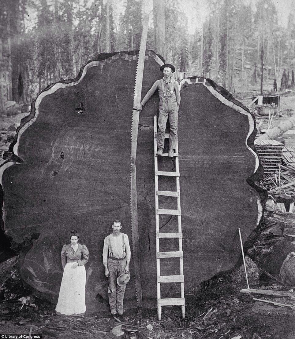 Prometheus Tree