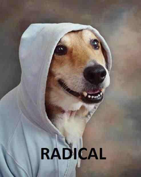Dogs+can+skateboard+too+_1ea346f87109d66df5aaadaccd12b83f dogs can skateboard, too 128337319 added by dashgamer at enter