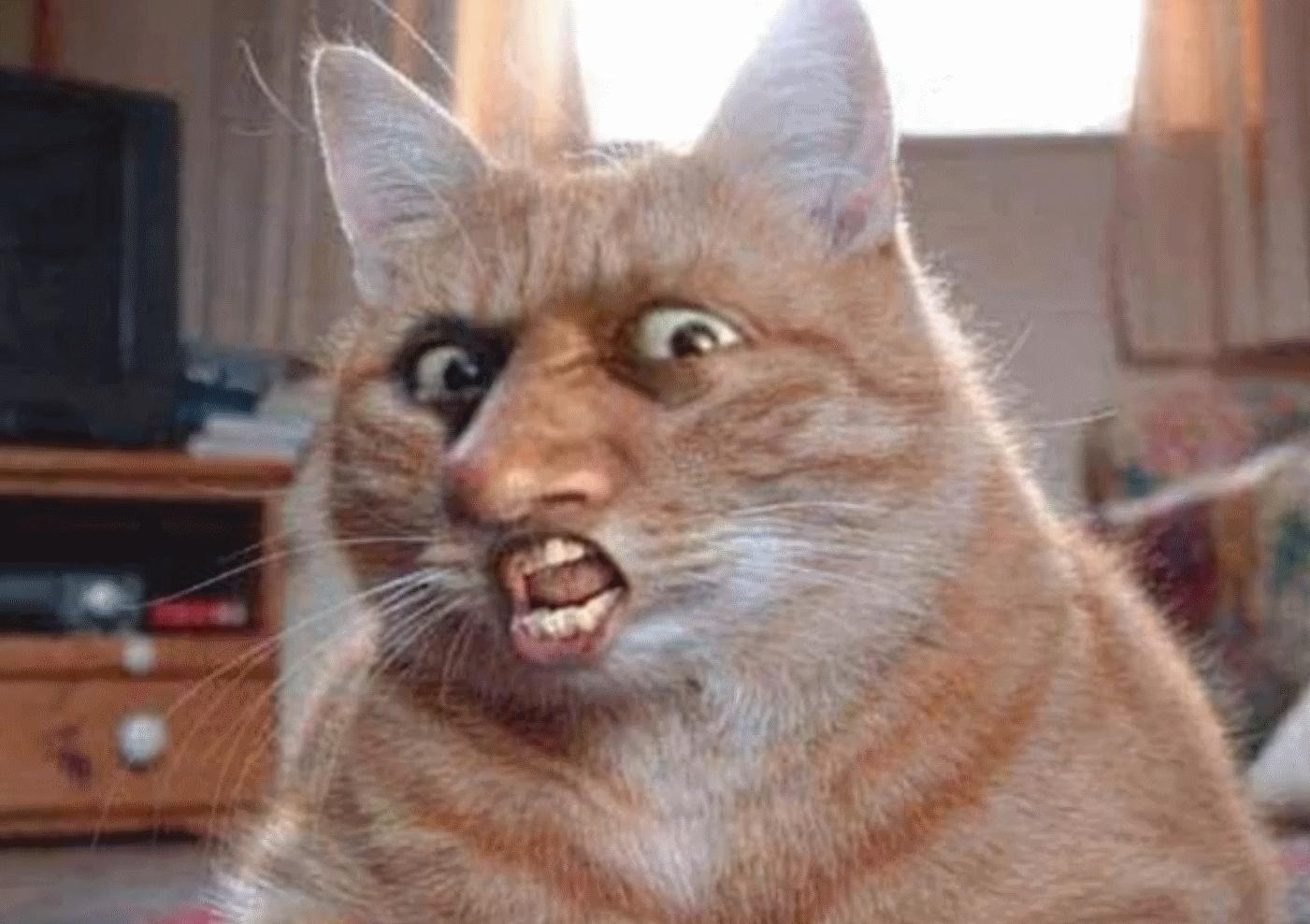 Human Cat Face